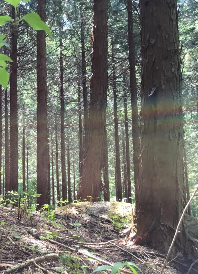 15.5.2森の光